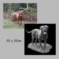135 voorbeeld hond de bruin