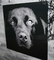 Lasergravure - art.nr. 5558 Labrador in glas